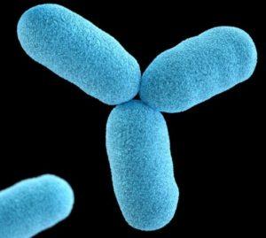 ' Bacteria ' ' Bacteria types ' ' Bacteria classification ' ' Bacteria facts '