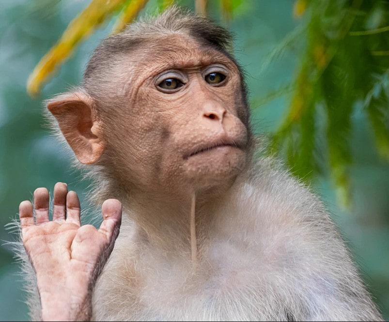 ' Monkey ' ' Monkey habitat ' ' Monkey eating food ' ' Types of monkey ' ' Facts about Monkey '