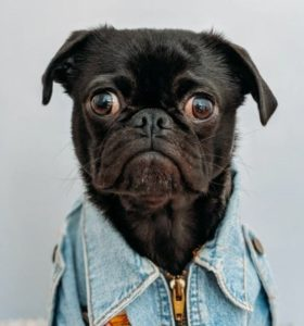 ' dog image ' ' dog picture ' ' pet animal ' ' pet dog ' ' dog pet '