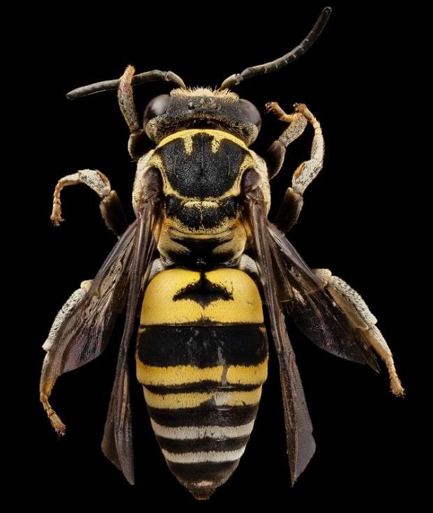 ' wasps ' ' wasp family ' ' wasps nest '