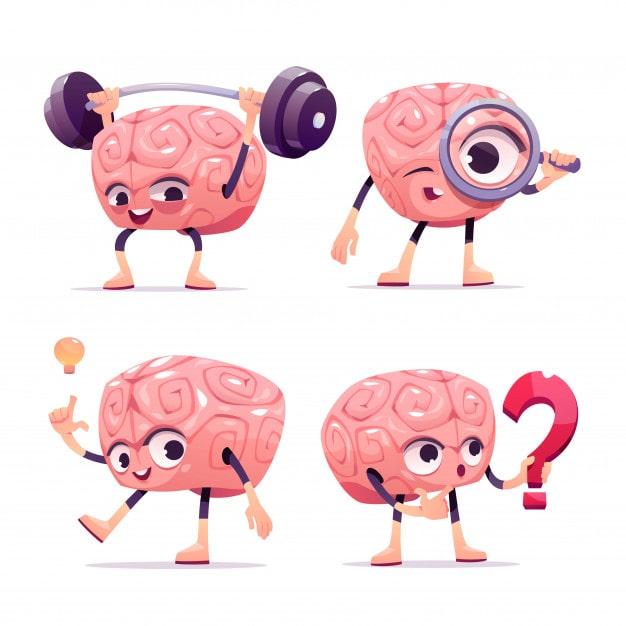 ' brain ' ' facts of brain ' ' brain parts '