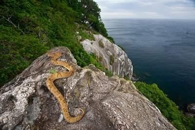 ' snake island ' ' snake island Brazil '